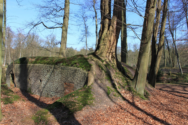 Een goed gecamoufleerde bunker in het Mastenbos. (foto Wouter Gheyle, © Provincie Antwerpen - Dienst Erfgoed / UGent)
